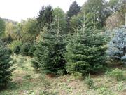 Baumkultur Familie Hörhager